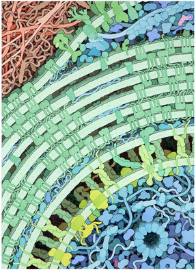 David Goodsell Watercolor Art